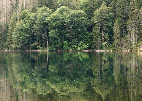 Black Lake, Lake, Water, šumava, Nature, Surface