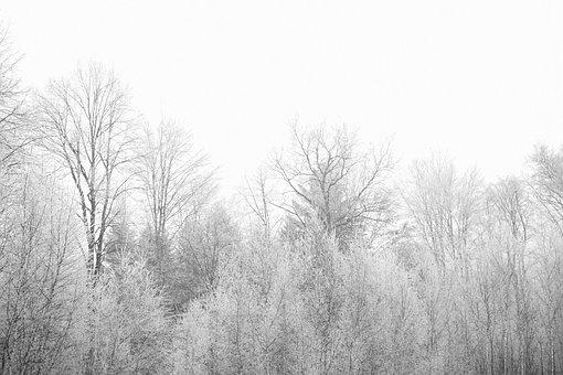Autumn, Winter, Trees, Branches, Alpine, Birch, Aspen