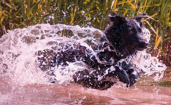 Wet Dog, Dog, Wet, Water, Pet, Animal, Lake, Wet Fur