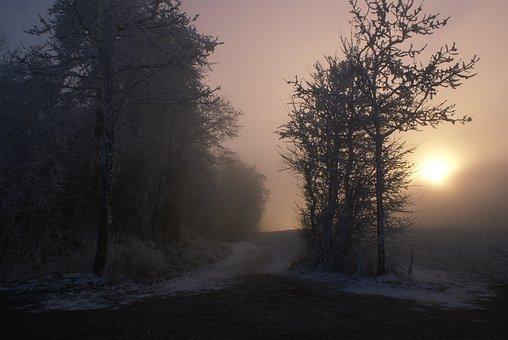 Autumn, Mist, Trees, Misty, Fall, Winter, Silhouette