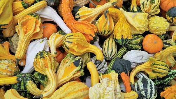 Squash, Orange, Yellow, White, Nature, Autumn, Fall