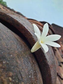 Again, Beautiful, Jasmine