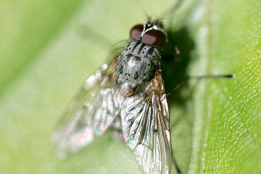 Fly, Meat-fly, Garden, Nature, Animals, Flower, Trees