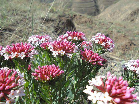 Wild Flowers, The Loess Plateau, If The Dons
