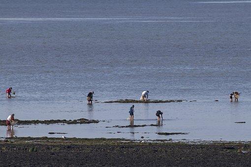 Shell Fischer, Saint Aubin Sur Mer, Normandy