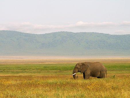 Elephant, Tanzania, Landscape, Africa, Wildlife