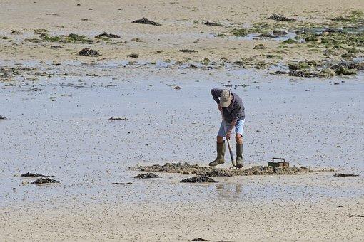 Sandworms, Forke, Watts Worms Dig, Coast, Sea, Ebb