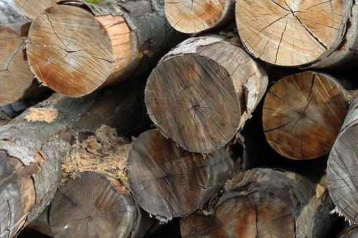 Wood, Trunk, Cut Wood