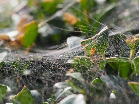 Cobweb, Creepy, Halloween, Fear Of Dawn, Horrible