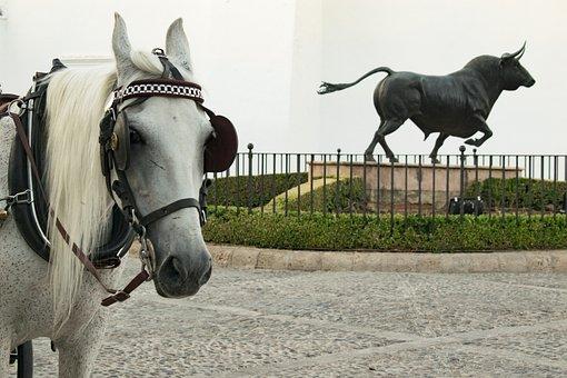 Horse, Toro, Round, Malaga, Andalusia, Spain, Park