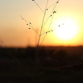 Afternoon, Golden Nature, Garden, Sunset, Sol