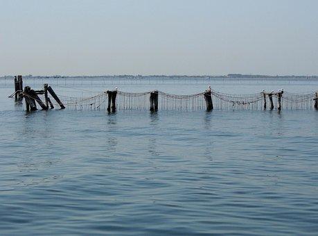 Mussel Breeding, Sea, Water, Habitat, Summer, Salty