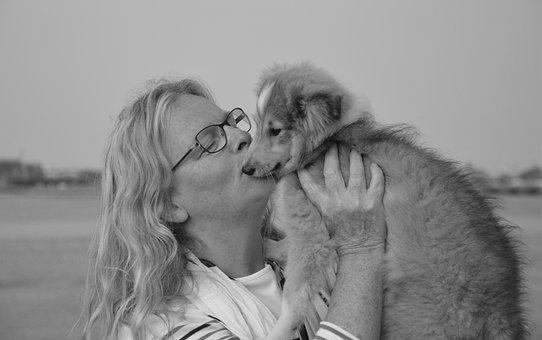 Kiss, Dog, Woman, Shetland Sheepdog, Tenderness