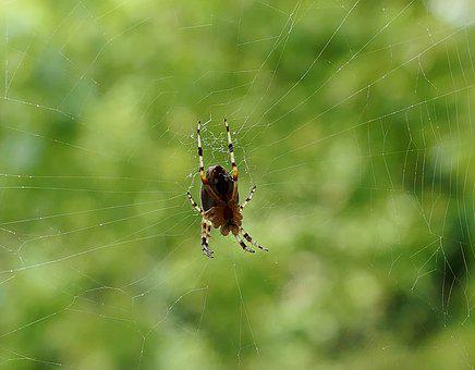 Legs, Garden, Insect, Spider, Morning, Nature, Web
