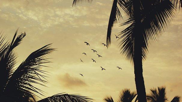 Sunset, Birds, Tropical, Hawaii, Sheraton, Hotel