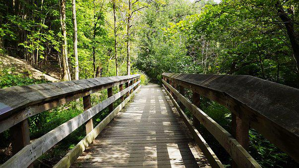 Way, Forest, Bridge, Tree, Central Park, Nature