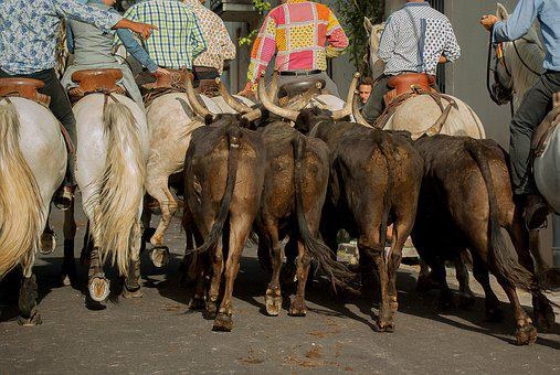 Camargue, Riders, Gardians, Bulls, Camargue Horse, Herd
