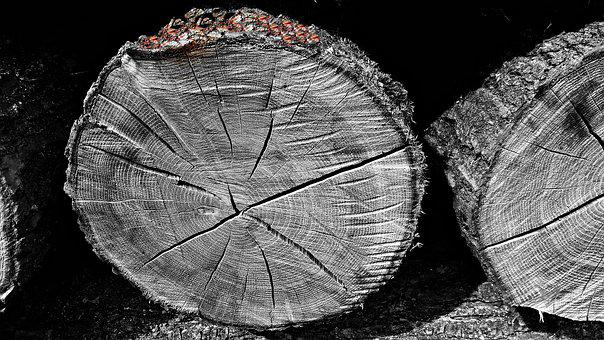 Wood, Bale, Logs, Tree, Felling, Wooden Balls, Nature