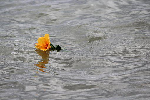 Mar, Yellow Flower, Delivery, Flower, Litoral