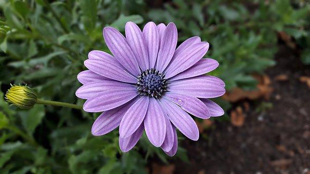 Flowers, Flower, Color, Lila, Violet, Summer, Nature