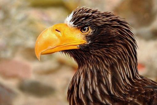 Giant Eagle, Adler, Bird, Raptor, Bird Of Prey, Animal