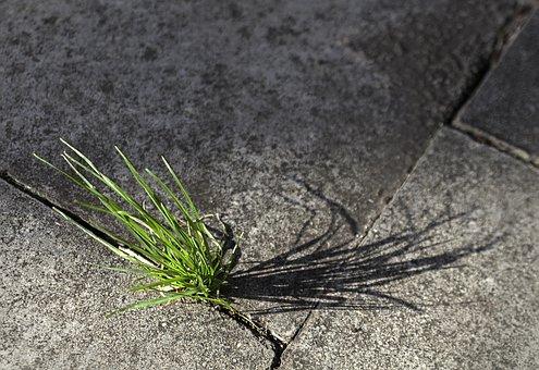 Grass, City, Nature, Shadows, Sun, Park, Plant