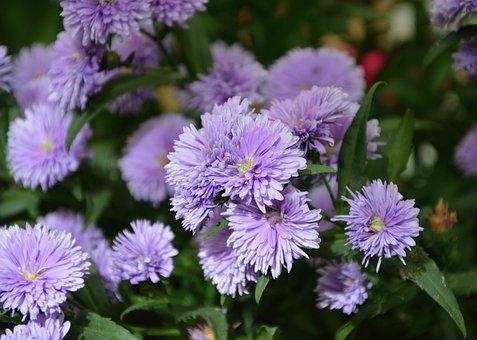 Flowers Parma, Garden, Nature, Petals, Violet