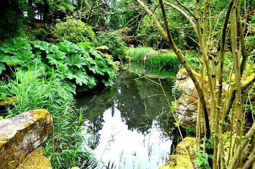 Chatsworth Gardens, Plants, Pond, Secluded, Water