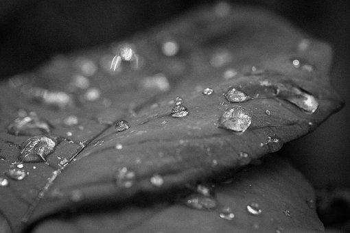 Autumn Leaves, Nature, Black And White, Rain, Season