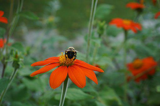 Bee, Flower, Nature, Spring, Summer, Insect, Blossom