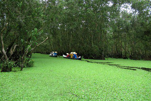 Viet Nam, Between On Forest, Reserves Of Between About