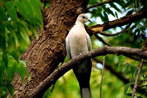 Bird, Dove, Nature, Feather, Animal, Pigeon, Symbol