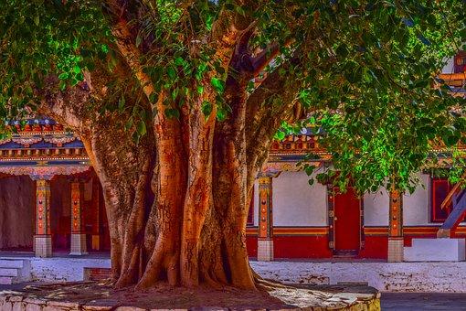 Tree, Banyan Tree, Bark, Big Tree, Courtyard, Banyan