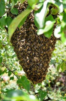 Bee, Hive, Honeycomb Chichewa, Nature, Macro