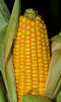 Corn, Corn On The Cob, Food, Vegetables, Cereals