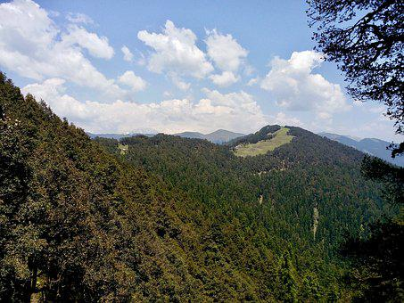 Conifers, Forest, Himalayas, India, Alpine, Mountains