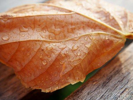 Leaf, Drop Of Water, Dewdrop, Yellow, Autumn, Wet