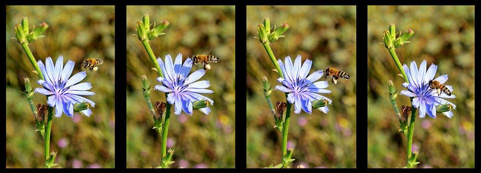 Flower, Nature, Macro, Spring Flowers, Plant, Flowers