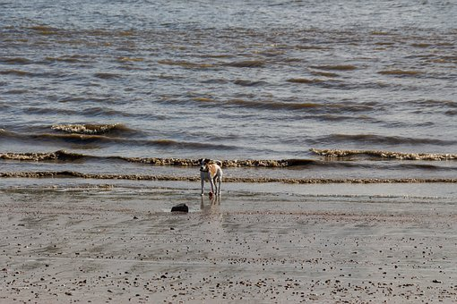 Dog, Beach, Lake, Holiday, Pet, Sand, Sea, Most Beach