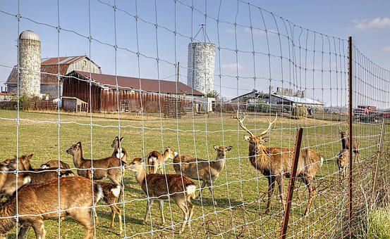 Barn, Rustic, Barns, Reindeer, Fence, Deer, Ohio