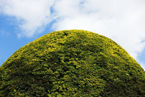 Hedge, Round, Topiary, Mound, Shape, Form, Green