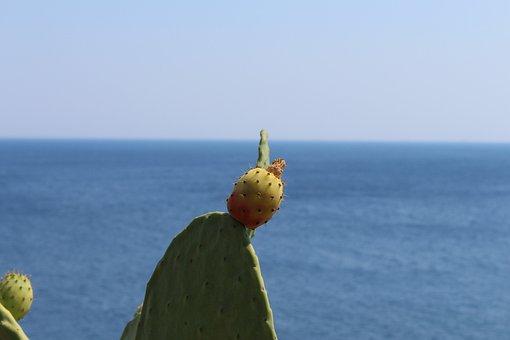 Salento, Italy, Puglia, Lecce, Nature, Flowers, Otranto