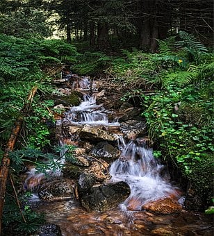 Stream, Tatry, Water, The Stones, Torrent, Tree