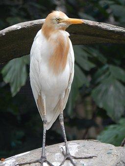 Bird, Conserve, White, Nature, Conservation, Wild