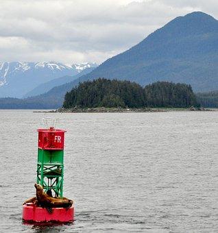 Alaska, Sea Lions, Marine, Wildlife, Nature, Mountains