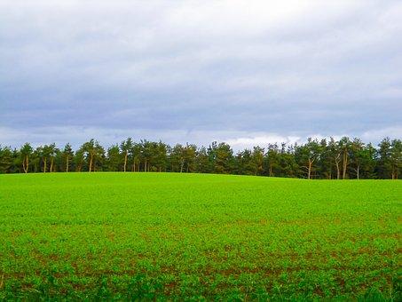 Farm Field Dunkeld Scotland, Farm, Agriculture, Field