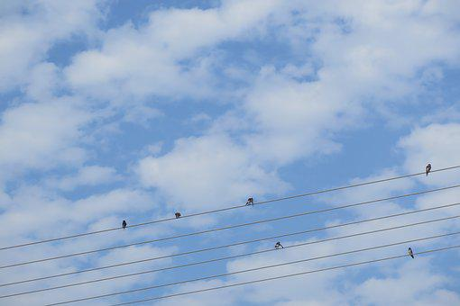 Blue Sky, Cure, Birds, Autumn