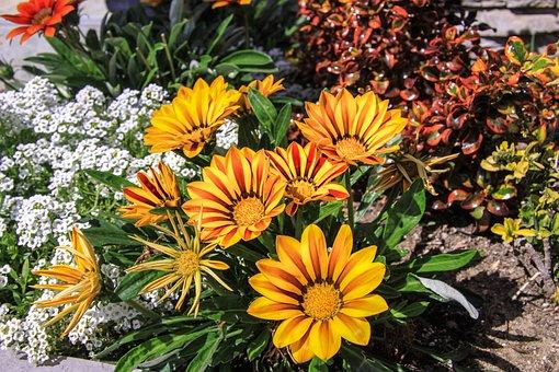 Flowers, September 1, Classes, Lessons, Bouquet