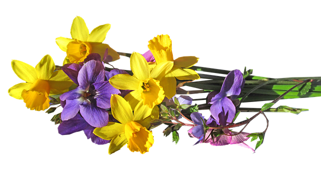 Flowers, Daffodils, Bulbs, Bunch, Spring, Cut Out