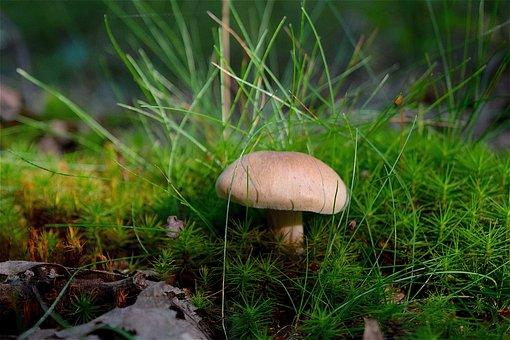 Mushroom, Grass, Forest, Floor, Sunlight, Red, Nature